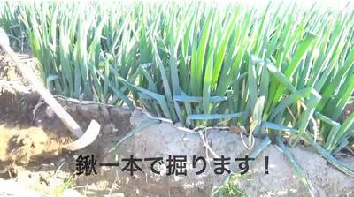 白ネギ動画.JPG