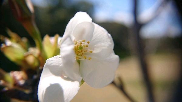 花びらアップ.jpg