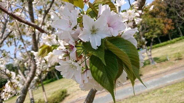 葉が出た花.jpg