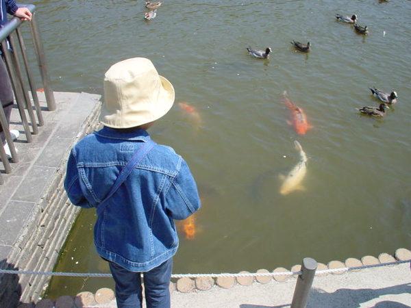 鯉と.jpg