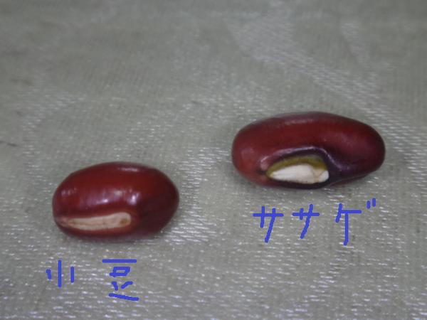 豆の比較.png