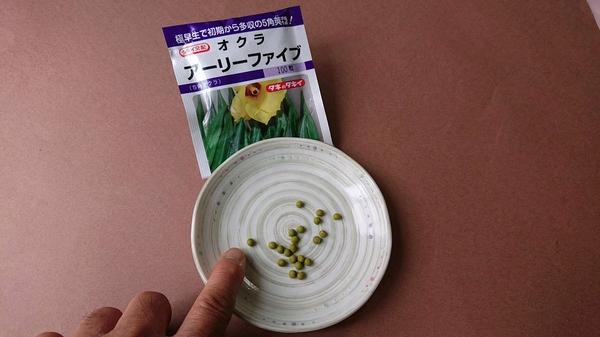 オクラの種.jpg