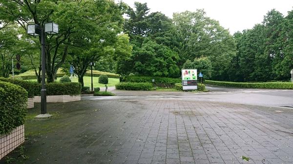 美術館前の緑.jpg