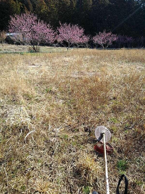 花桃の畑の草刈り.jpg