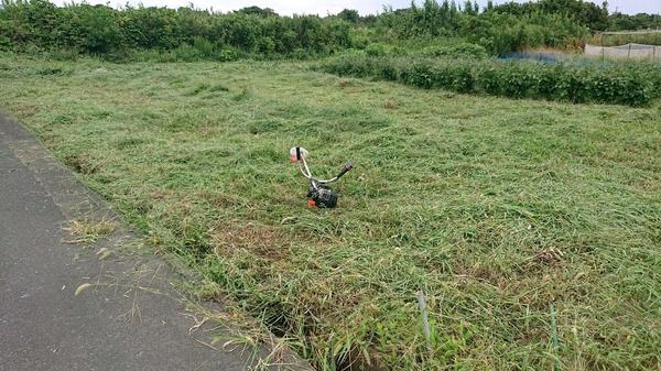 1ヶ月ぶりの草刈り.jpg