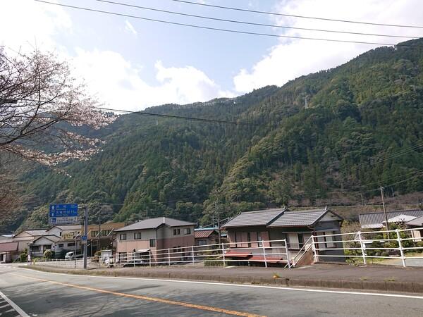 天竜杉全景.jpg