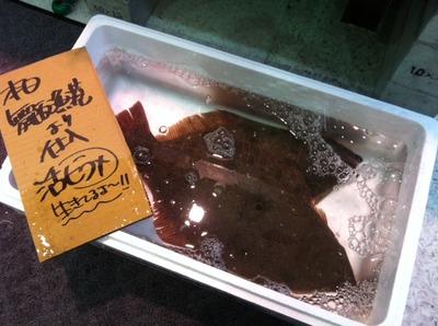 舞阪0401 (2).JPG